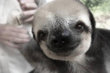 Sloth by Temujinsword