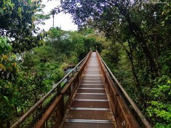 Jungle trail by merkuz222