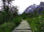 Log pathway in the mountains