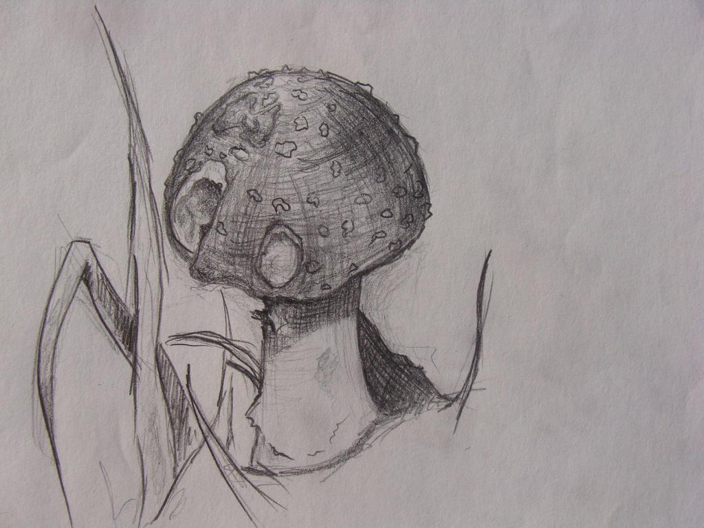 Toadstool by Ctverys