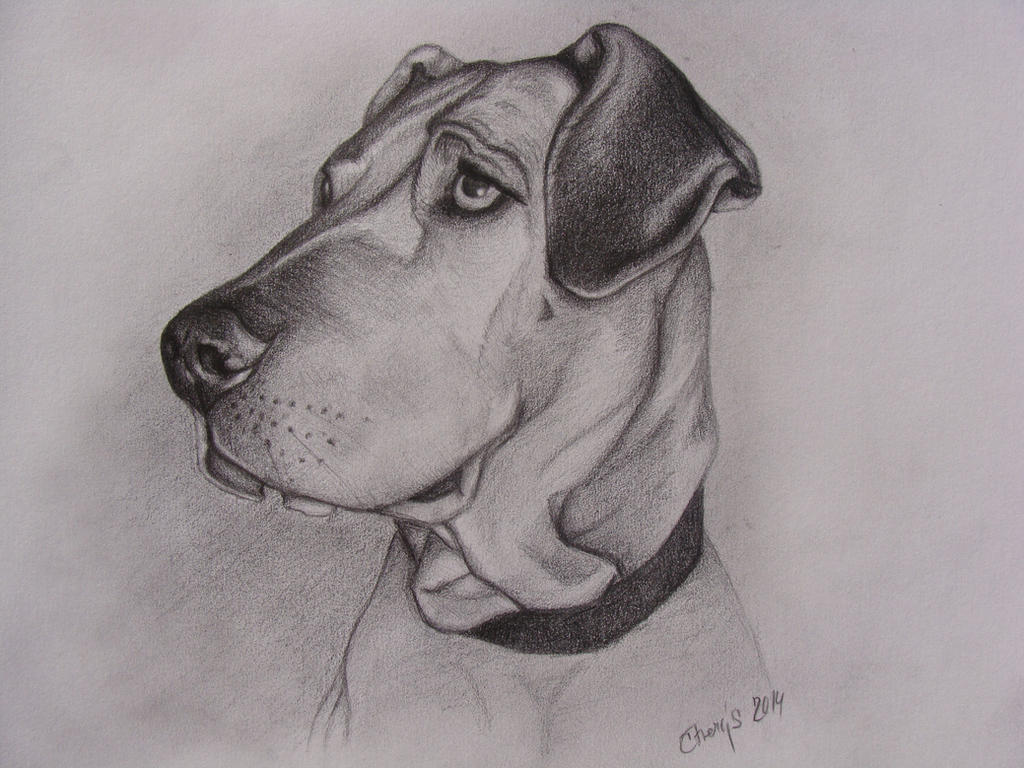 Dog - Gappa by Ctverys
