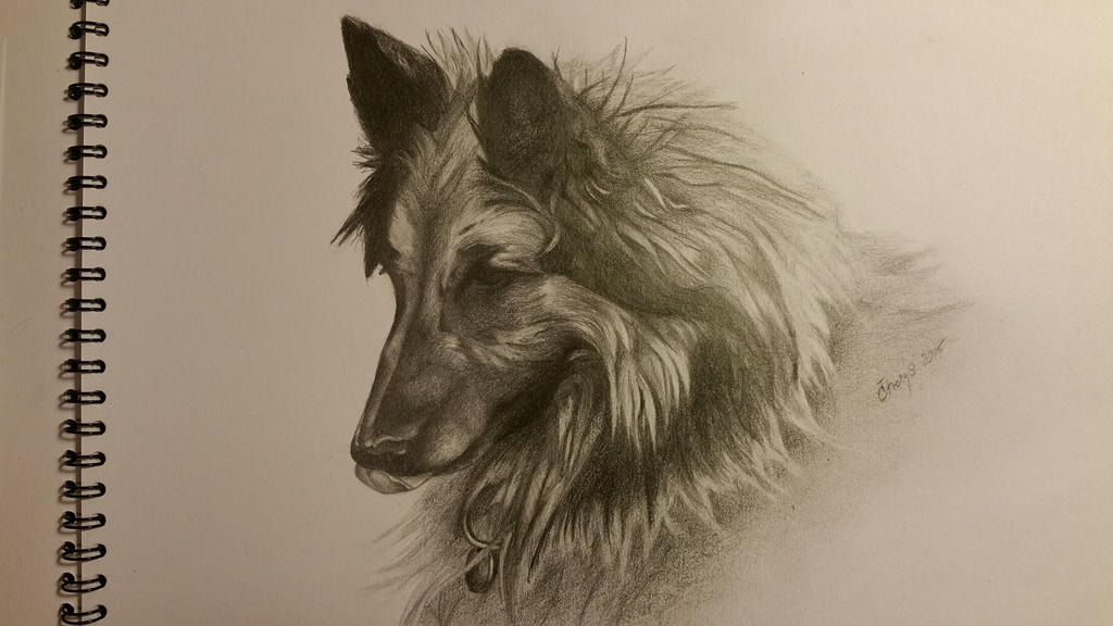 Dog III by Ctverys