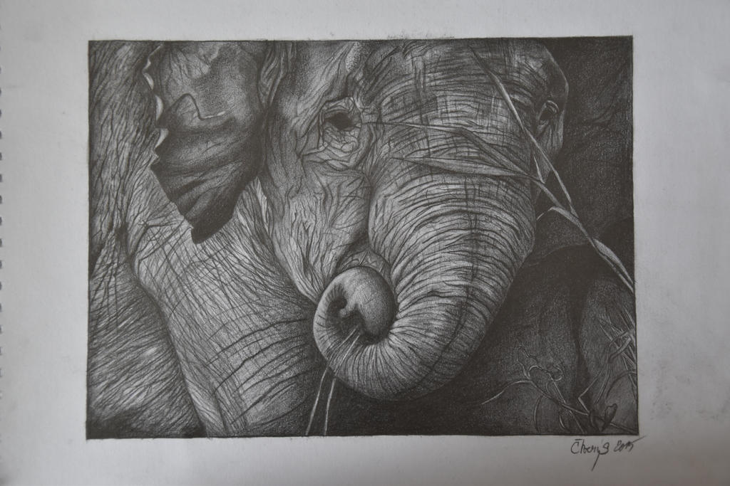 Elephant by Ctverys