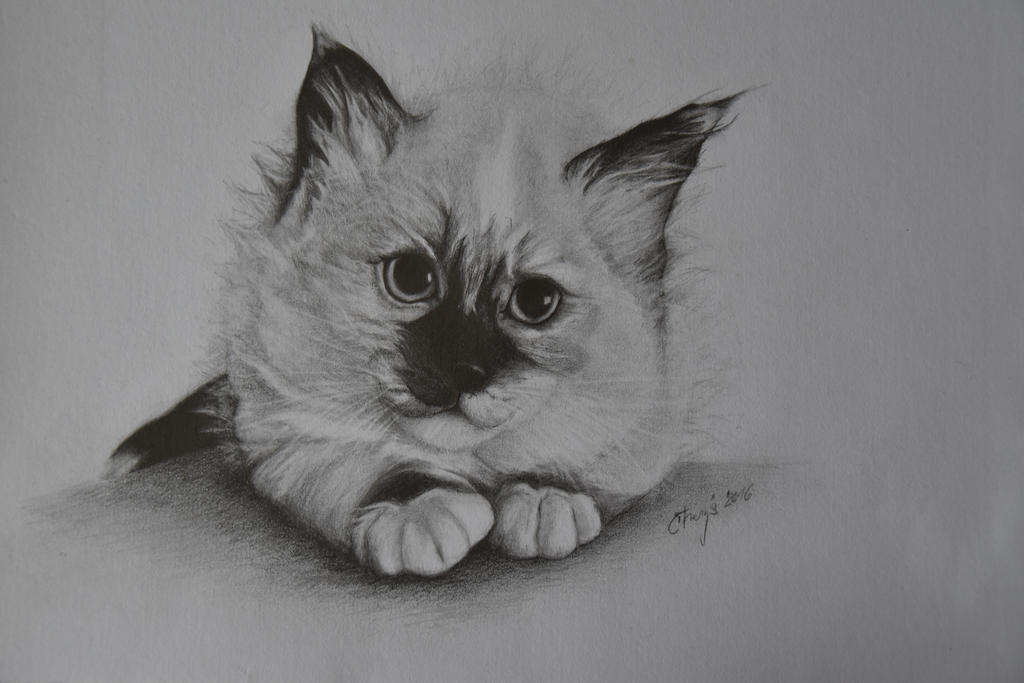 Kitten by Ctverys
