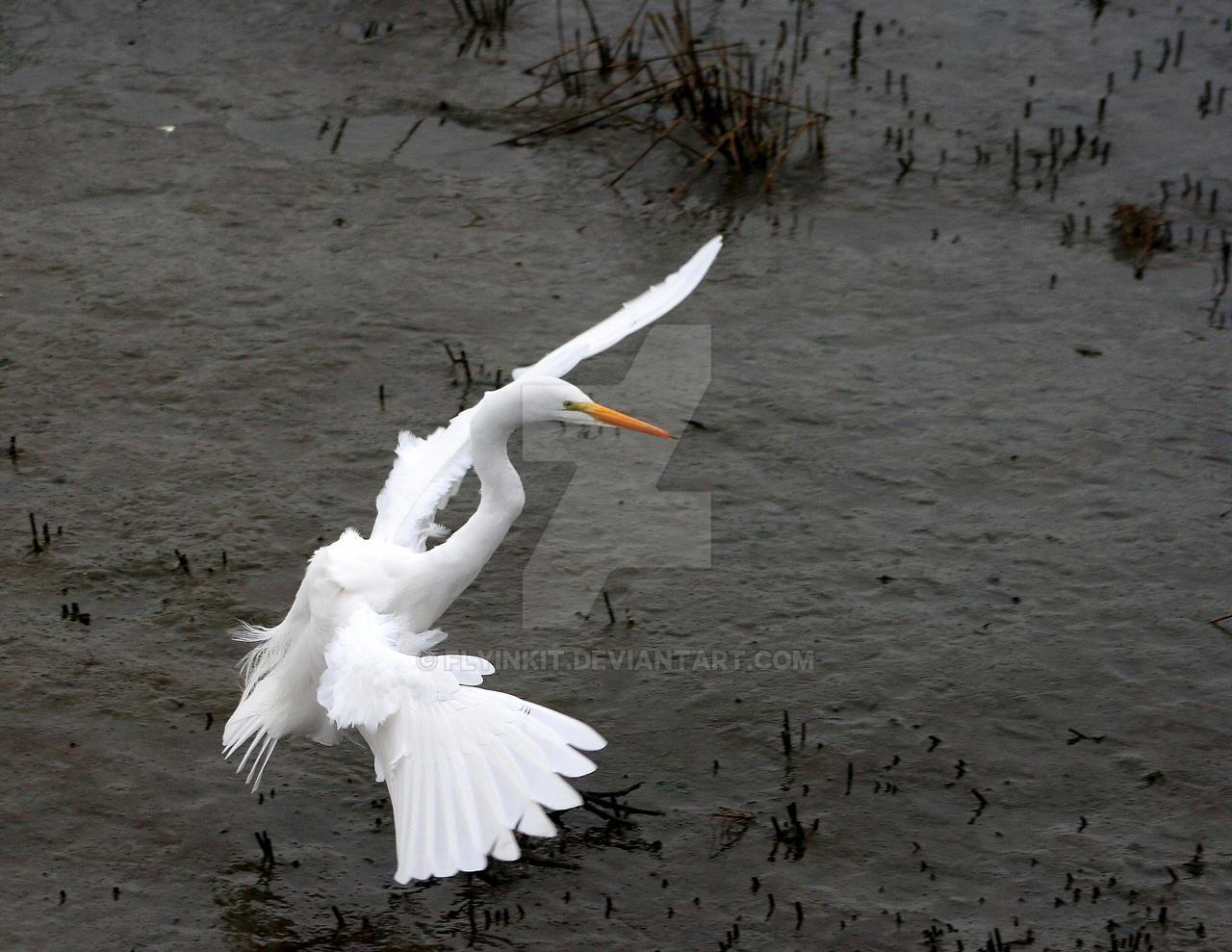 Egret Landing By Flyinkit On Deviantart