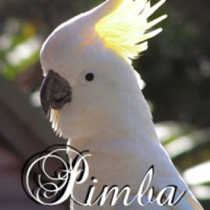 Pimbirthon's Profile Picture