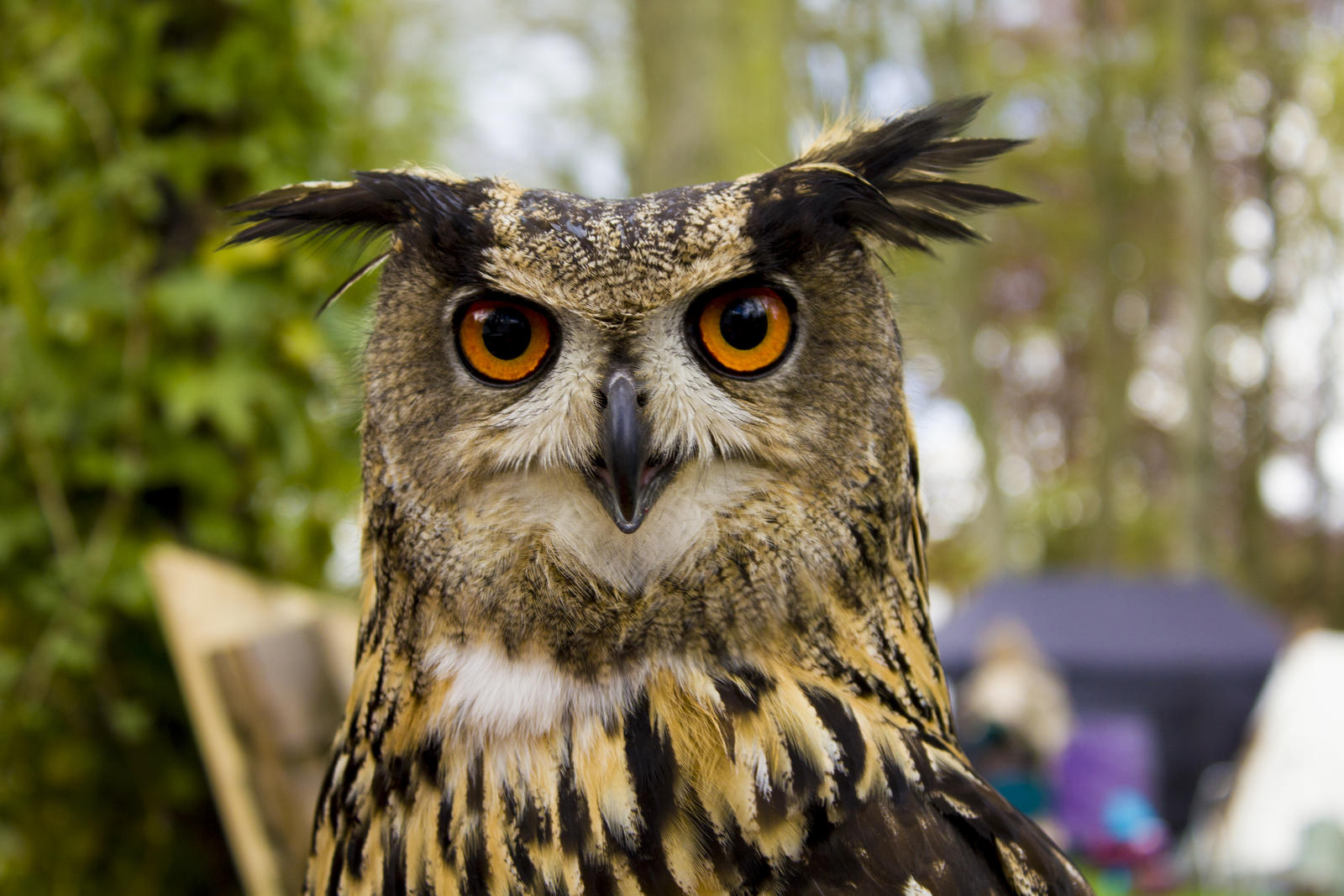the_stare_of_the_owl_by_daveydesign-da06ui3.jpg