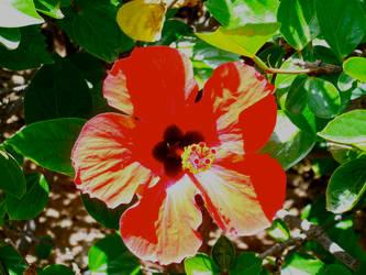 Red petals by RachelJane0711