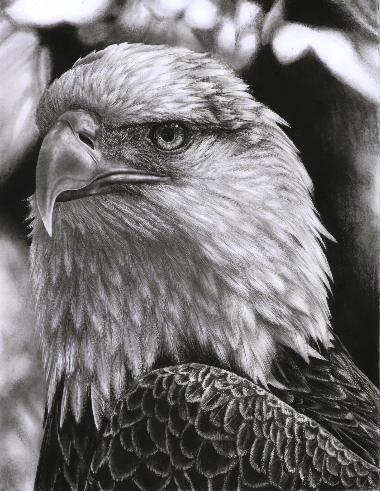 Dibujo Aguila. Affordable Resultado De Imagen Para Aguila Dibujo ...