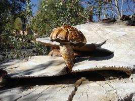 Mushroom on stump by angelstar22