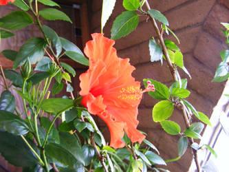 Lovely flower by angelstar22