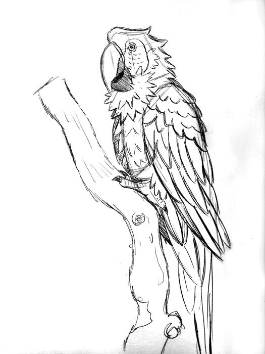 Macaw Sketch E8 by Erikku8