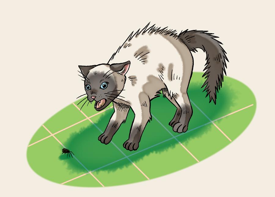 Scared Kitty by Erikku8