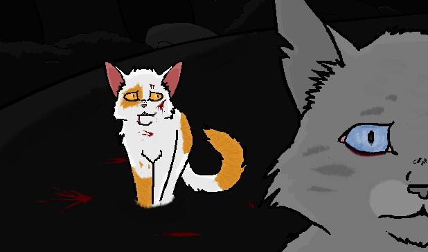 Midnight Warrior Cats Badger