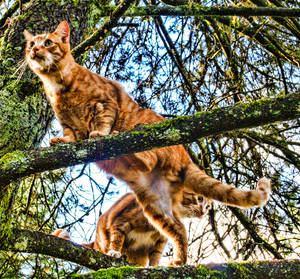 cats, cats, cats XXIII by evy-and-cats on DeviantArt