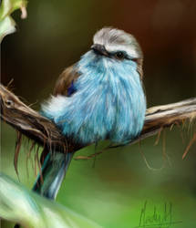 Racket Tailed Roller
