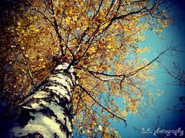 ... the little birch tree... by bogdanici
