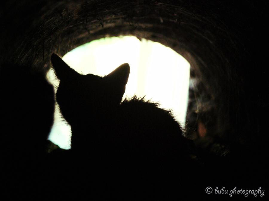 Scared Cat Hiding Won T Eat
