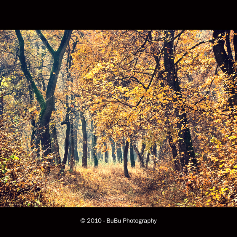 .:Heavenly Forest:. by bogdanici