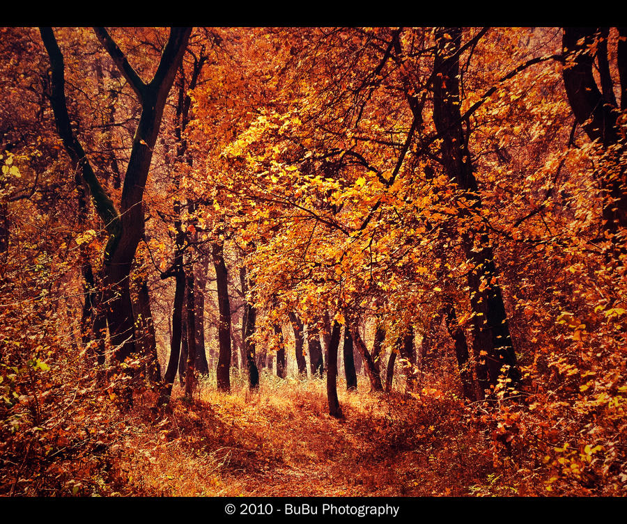 .:In The Midst Of Autumn:. by bogdanici