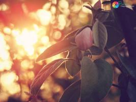 .:Light Surrounding You:. by bogdanici