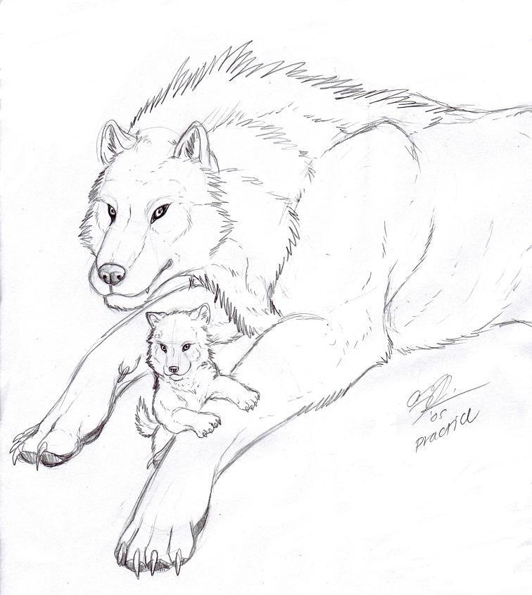 Sad Wolf Drawing   Photo#25