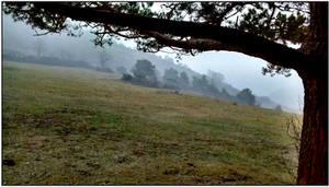 Meadow in fog
