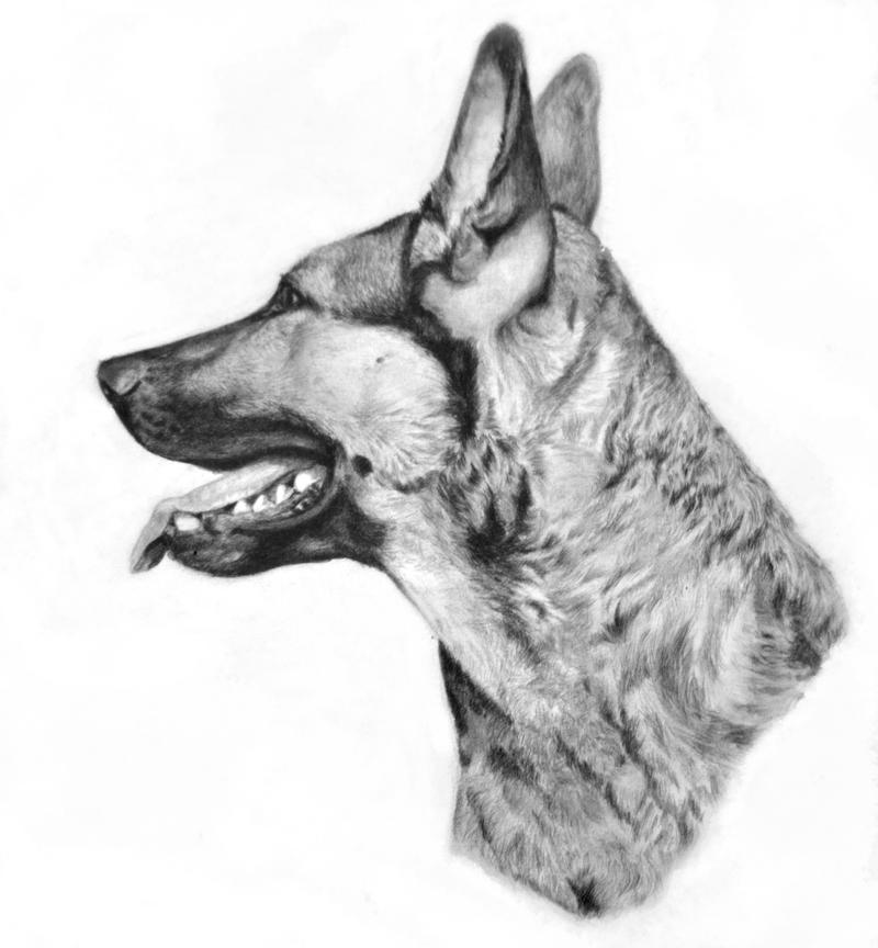 Drawing of Laika. by Razorlives