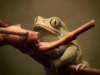 Wet Waxy Monkey Frog by ktalbot