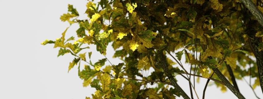 Laubwerk cypress oak - autumn by macray411