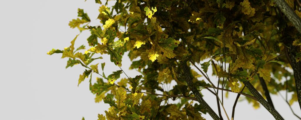 Laubwerk Leaves by macray411