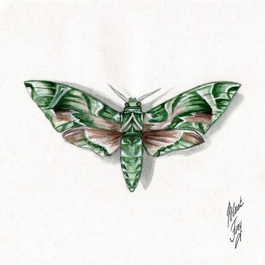 Daphnis nerii by BlackFurya