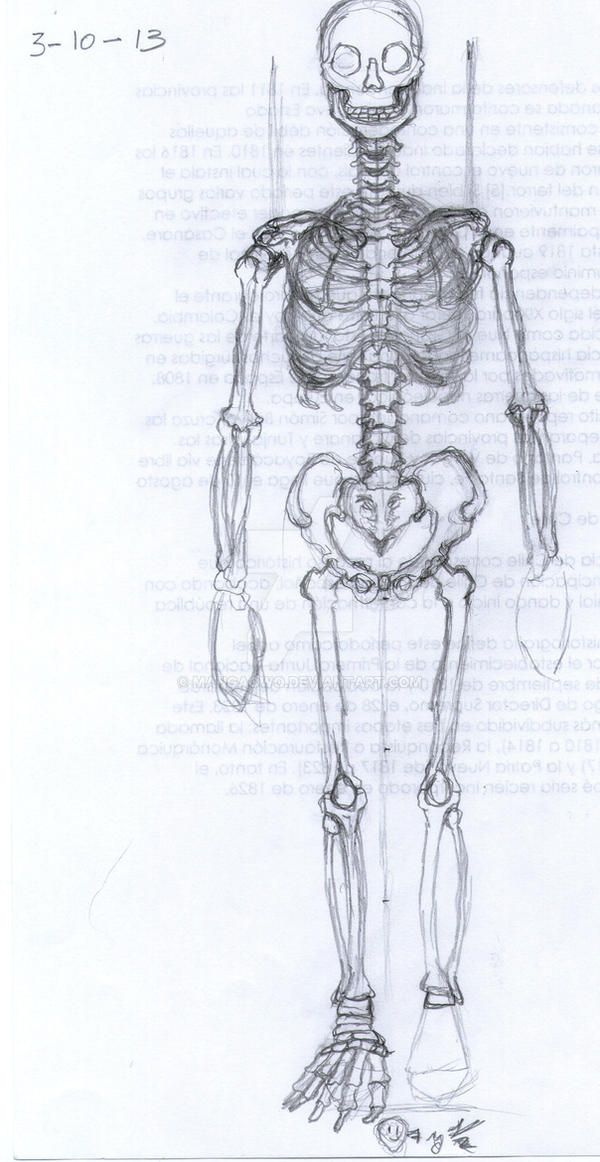 Practica de esqueleto masculino 2 by Mangaowo