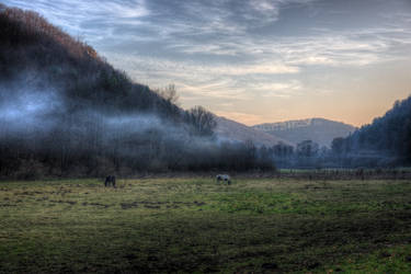 Horses and fog by kubica