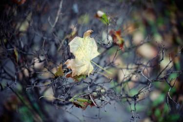 Leaf by kubica