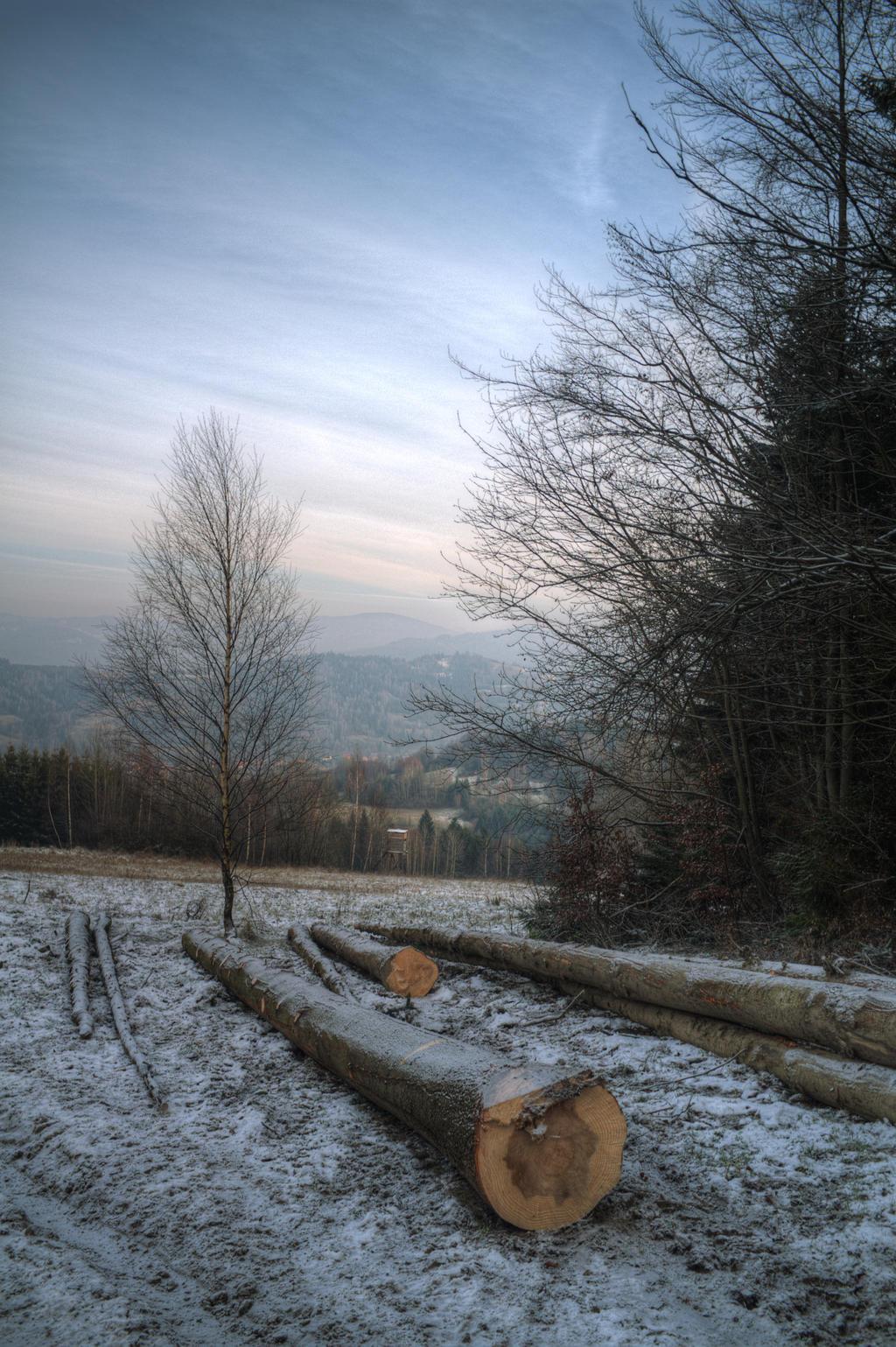 View from Krzyzowa by kubica