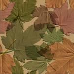 seamless_leaves_texture1