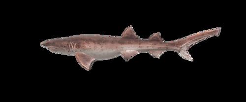 OceanFishing/Grand Mer - Draughtsboard Shark Model
