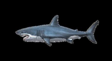 OceanFishing/Grand Mer - Great White Shark Model by farhan43