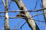 Black Squirrel 03-15-2020/03