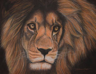 Lion by phareck