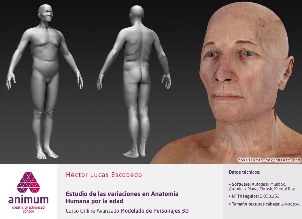 Age Variations in Human Anatomy Study by RoxasLucas on DeviantArt