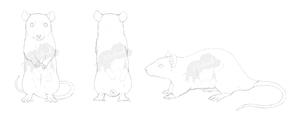 Line Drawing Rat : Commission rat lineart by prinzeburnzo on deviantart