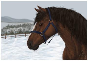 Horse of Winter by PrinzeBurnzo