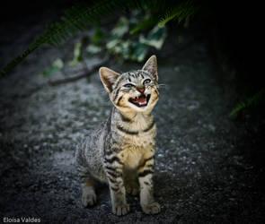44kittens: Meow meow meow meow