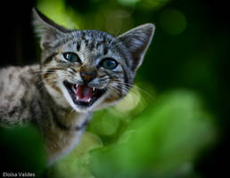 44kittens - Spring has sprung by Helewidis