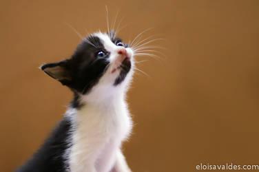 Soft kitty... Warm kitty...