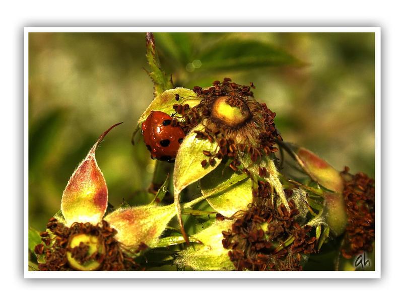 Bugs N Roses by GeminiArtNStock