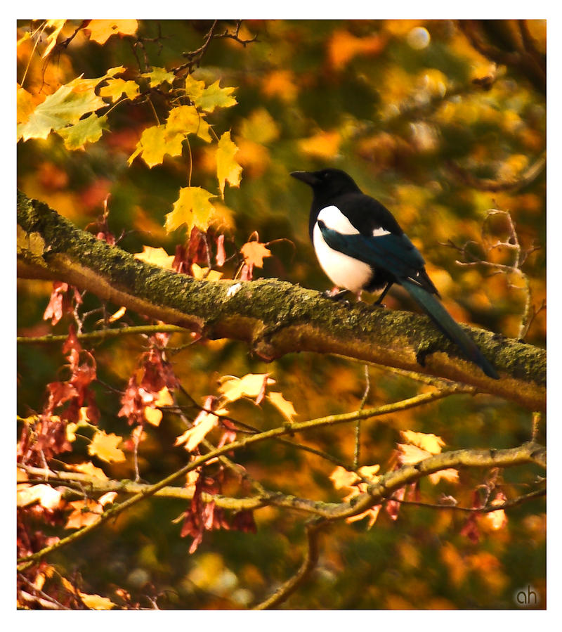 One For Sorrow Two For Joy