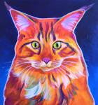 Cat - Cosmo